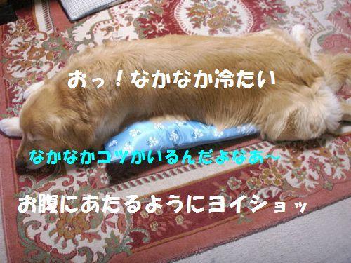 b0127531_1543937.jpg