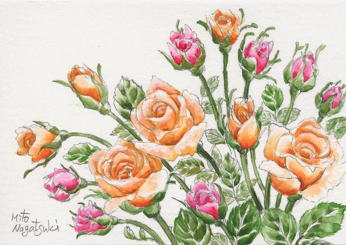薔薇たちの絵~水彩画~_b0089338_814327.jpg