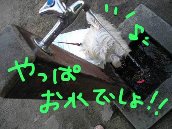 d0134156_17242128.jpg