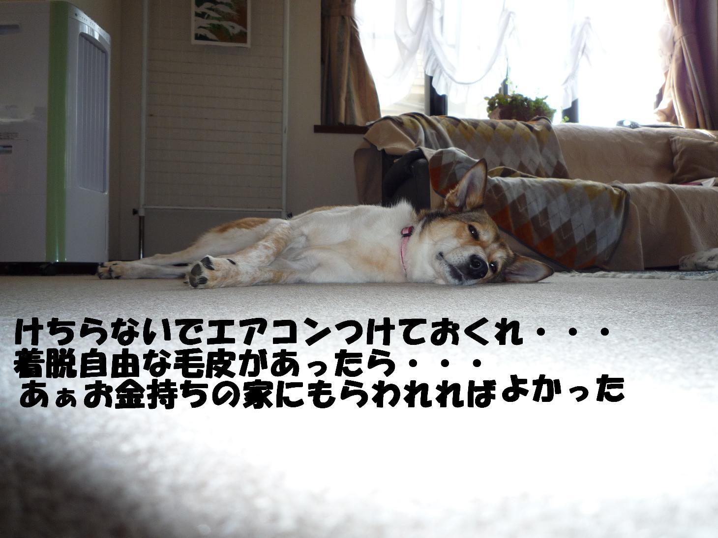 b0069163_11393436.jpg