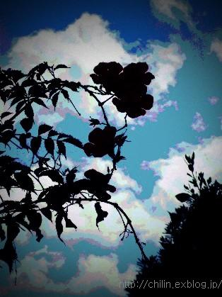 ・・・♪_e0003966_22414912.jpg