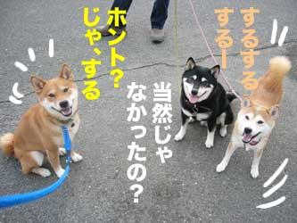 散歩コースにて、チビズにお願い_b0057675_6313632.jpg