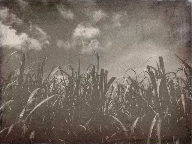 沖縄の風景 過去に見た景色_f0024992_1135547.jpg