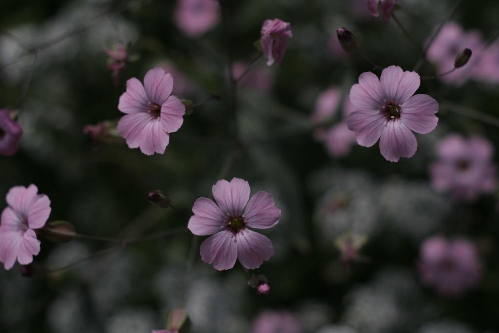 庭の花_f0042194_1073611.jpg