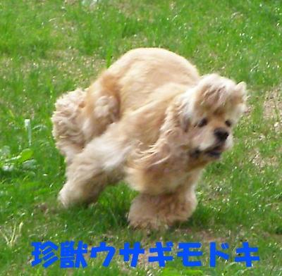 b0067012_1125878.jpg