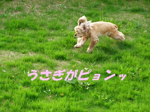 b0067012_1652.jpg