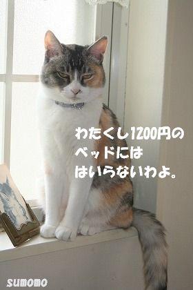 f0063729_152119.jpg