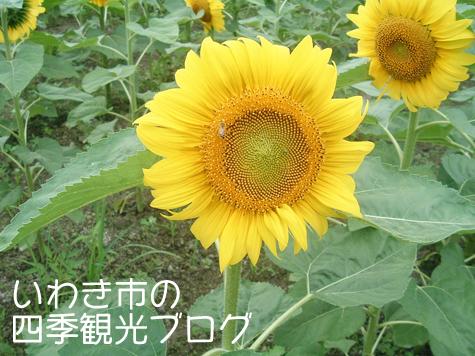 f0105342_1831409.jpg