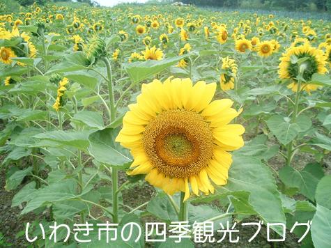 f0105342_1832713.jpg