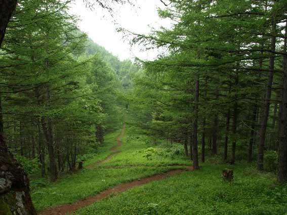 櫛形山森林浴_d0149245_22301368.jpg