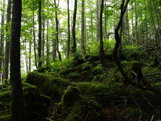 櫛形山森林浴_d0149245_22302163.jpg