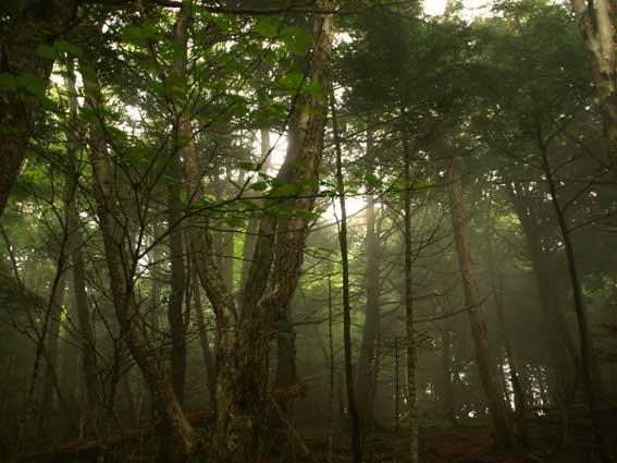 櫛形山森林浴_d0149245_22303069.jpg