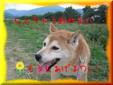 暑おすなぁ。。。_c0049950_21532611.jpg