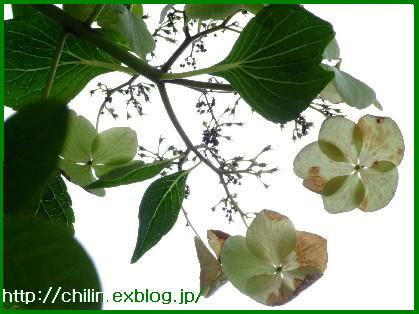 ・・・♪_e0003966_2358439.jpg