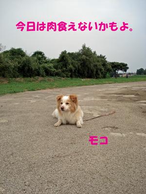 f0132070_2265524.jpg