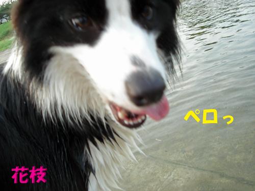 f0132070_9523864.jpg