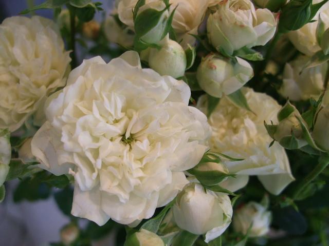 オークリーフ(利休草の花)_f0049672_15583143.jpg