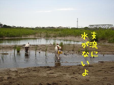 f0132772_8332410.jpg