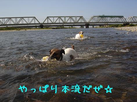f0132772_8334591.jpg
