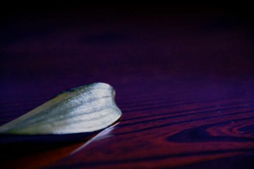 一枚の枯れ葉。_b0133890_14142799.jpg