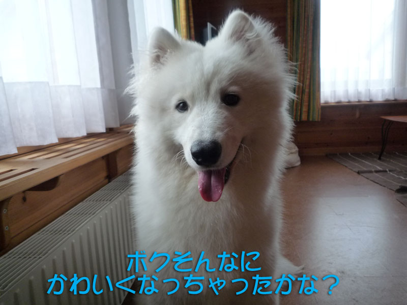 b0146024_17104174.jpg