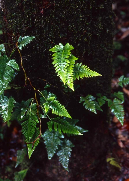 オーストラリア・クィーンズランド州世界遺産熱帯雨林 _f0050534_14272834.jpg