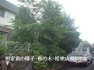f0031037_1844371.jpg