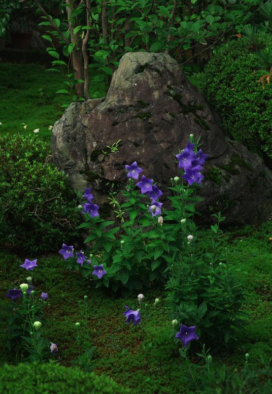 桔梗咲く庭_f0155048_22252818.jpg