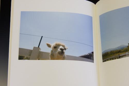 「alpaca」 hiromi takamatsu_c0098759_1351522.jpg