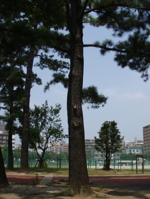 福岡も暑かーーー_a0077071_192532100.jpg