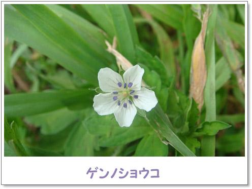 f0146493_11281975.jpg