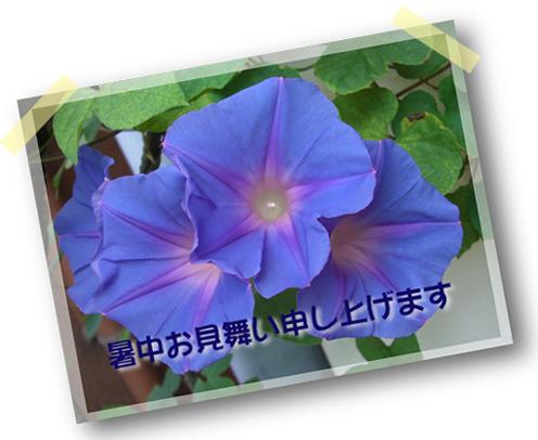 b0020911_1172784.jpg