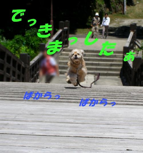 b0067012_1332618.jpg