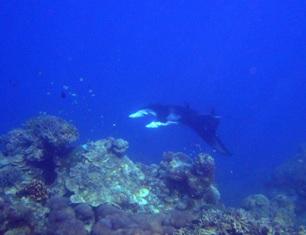 [ダイビング]ミルチャネルはとっても静か~♪♪_a0043520_22253680.jpg