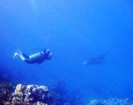 [ダイビング]ミルチャネルはとっても静か~♪♪_a0043520_22261586.jpg