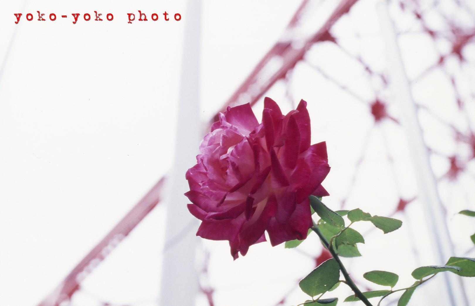 b0149130_22381052.jpg