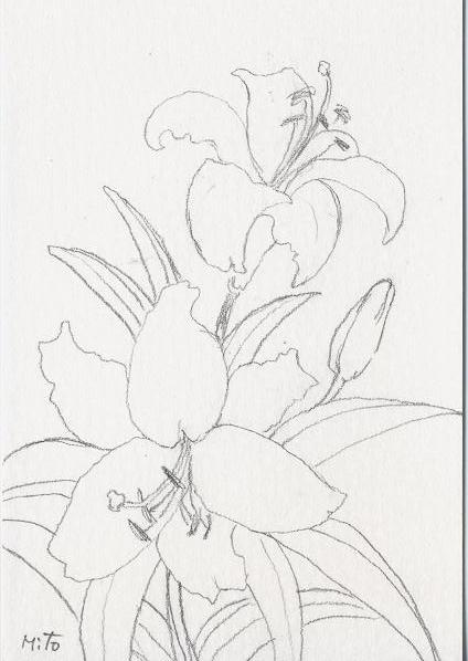 ピンク百合の絵~水彩画~_b0089338_7424338.jpg