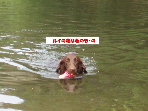道志川で_b0148945_2024947.jpg
