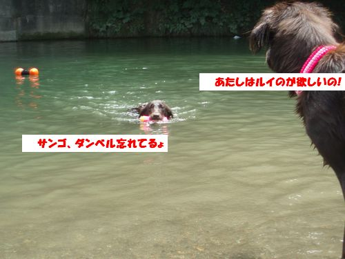 道志川で_b0148945_202522.jpg