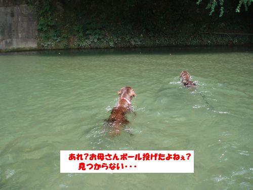 道志川で_b0148945_2035371.jpg