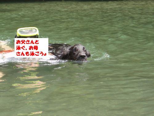 道志川で_b0148945_2043235.jpg