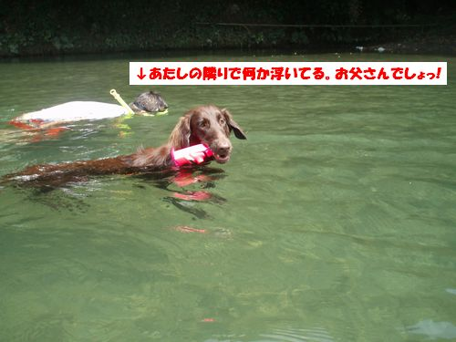 道志川で_b0148945_2051384.jpg