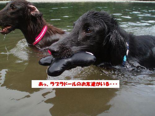 道志川で_b0148945_2061319.jpg