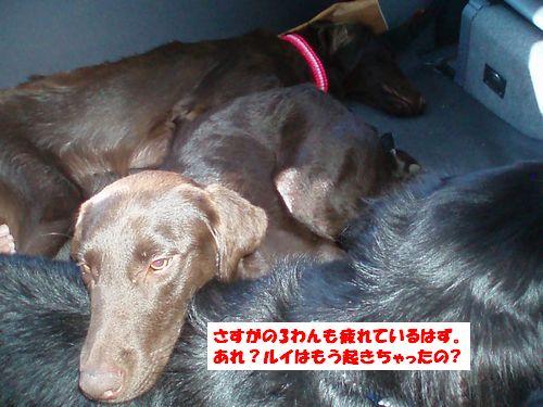 道志川で_b0148945_2072948.jpg
