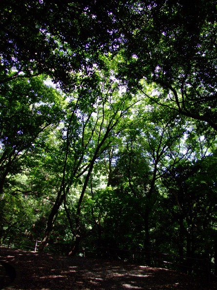 南公園_e0003966_12255215.jpg