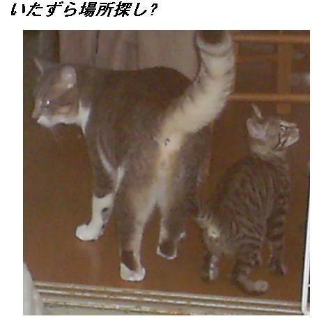 b0112380_2014998.jpg