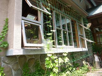 緑のカーテン_d0087595_91925.jpg