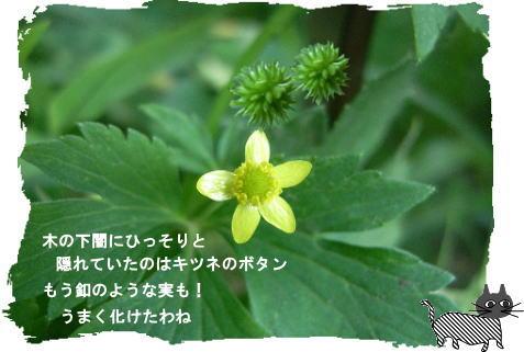 f0137096_3103639.jpg