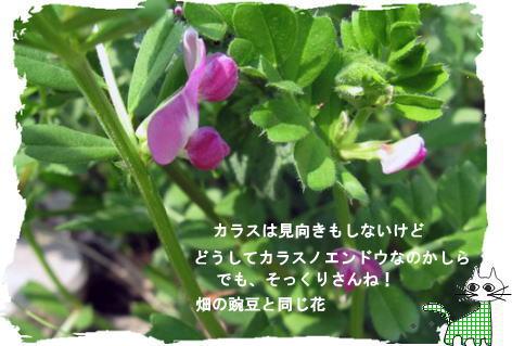f0137096_3125967.jpg