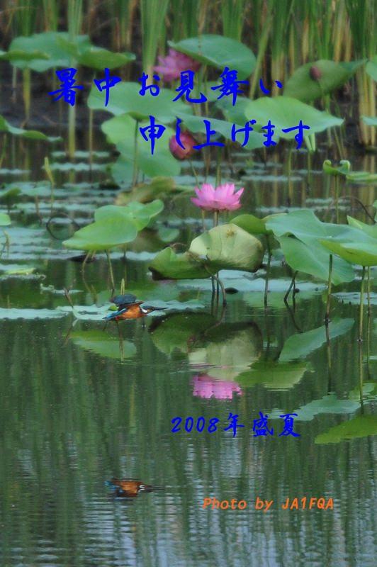 暑中見舞い_b0024798_17173610.jpg